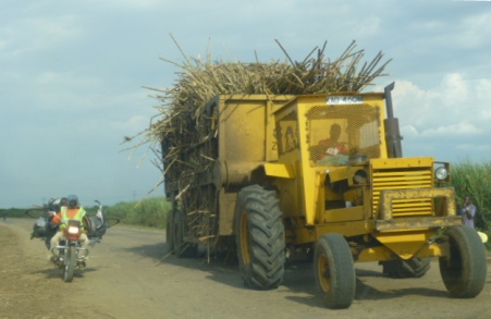 Sugarcane is transported to a mill for processing.